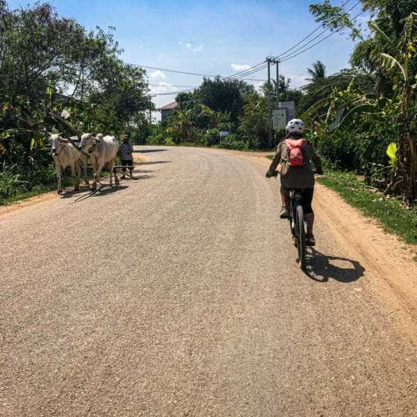 Cyclist passing an ox cart in Cambodia during a tour