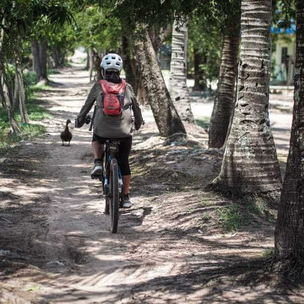Cyclist passes ducks on a dusty path whilst touring Cambodia