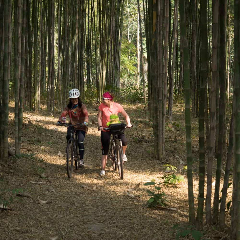 lady cyclists in bamboo forest in north Thailand