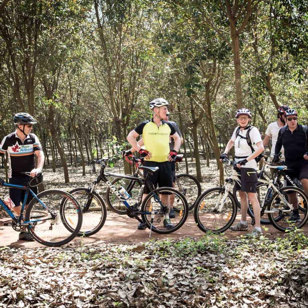 bicycle tour group in rubber tree plantation north Thailand
