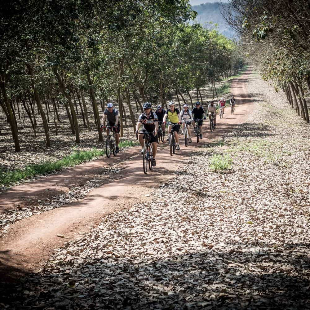 Cyclists riding through a rubber plantation in north Thailand