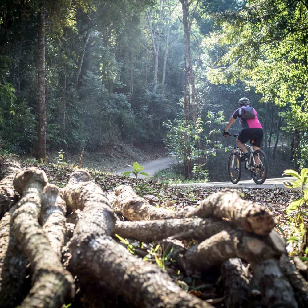 cyclists riding through a forest in north thailand