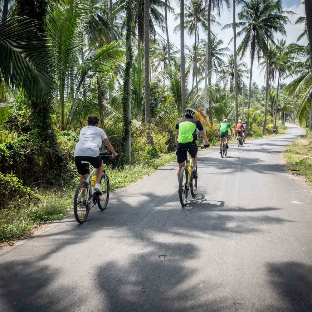 Cyclists on a tour in Thailand riding beneath coconut trees