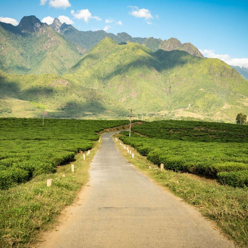 Narrow road through Vietnam's tea plantations