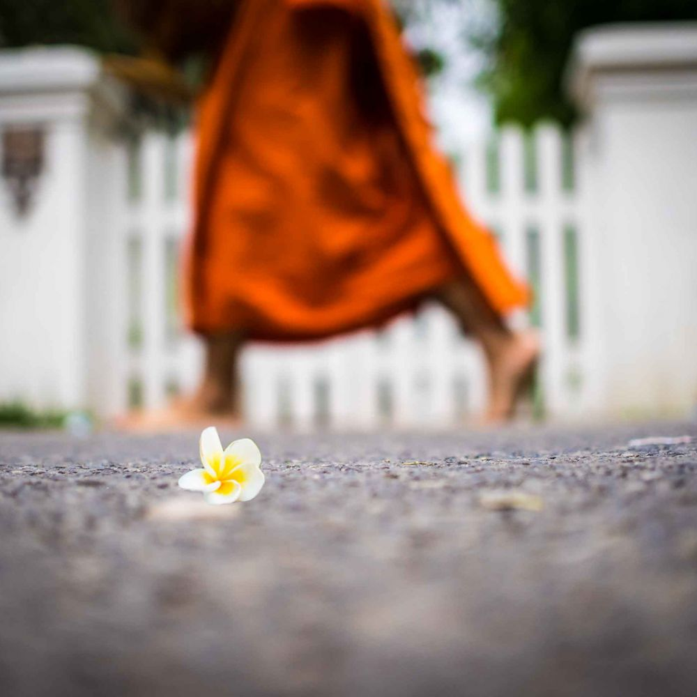 A monk walks past a flower in Luang Prabang