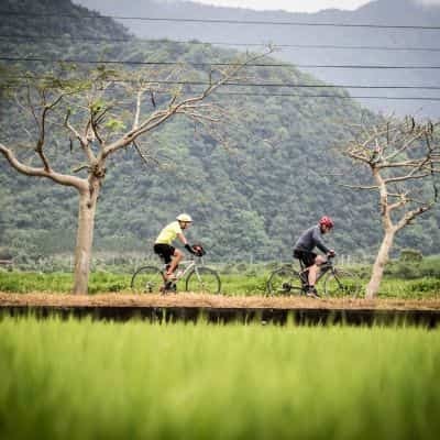 cyclist passing rice and trees touring Taiwan