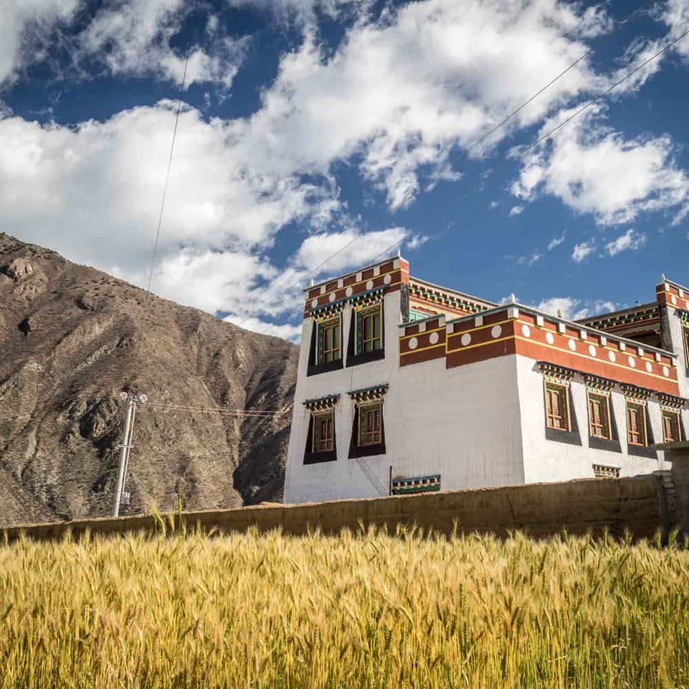 white Tibetan house and golden barley Sichuan China