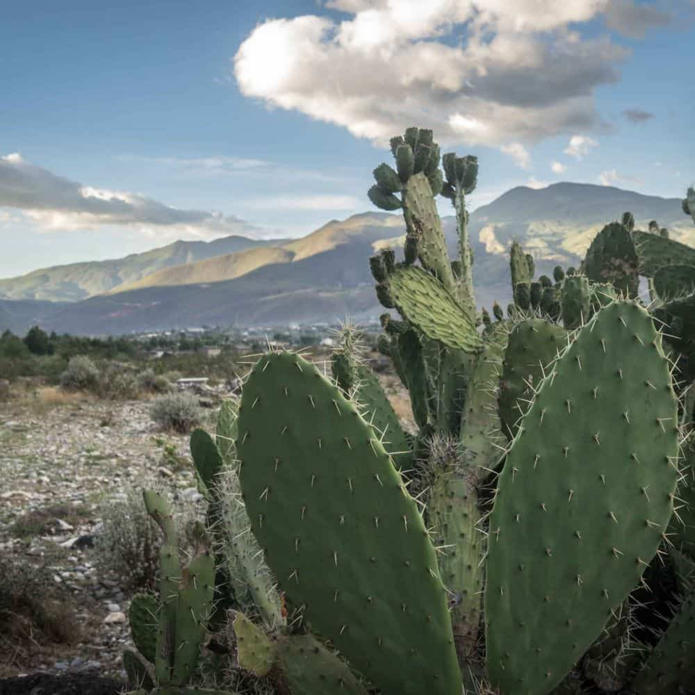 cactus in Sichuan province China
