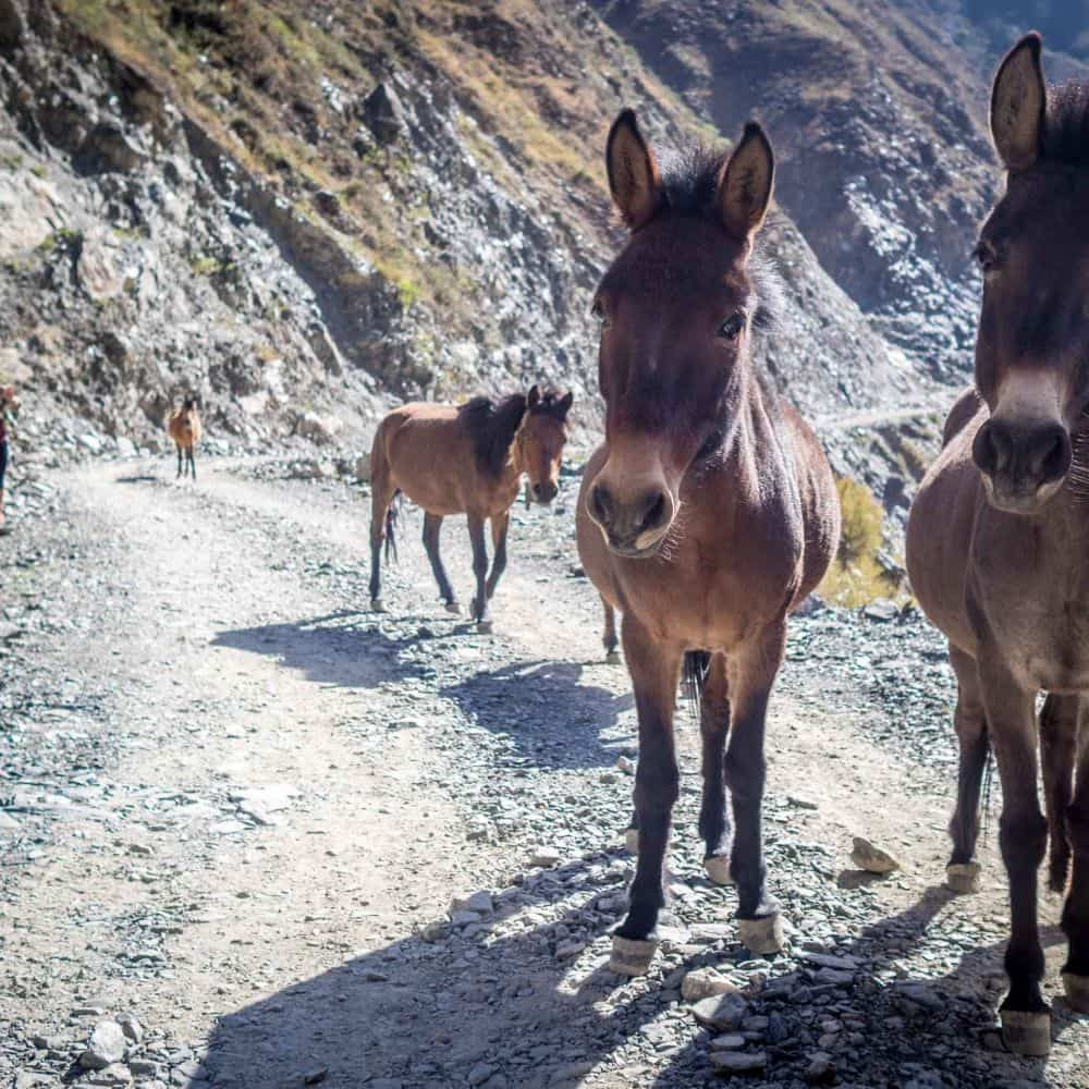 donkeys on rocky road Sichuan China