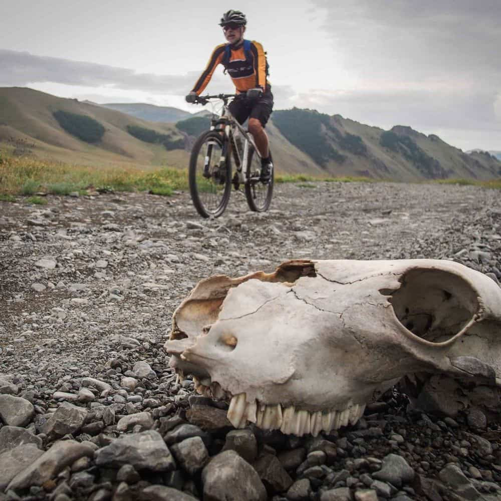 A cyclists passes a skull in Mongolia