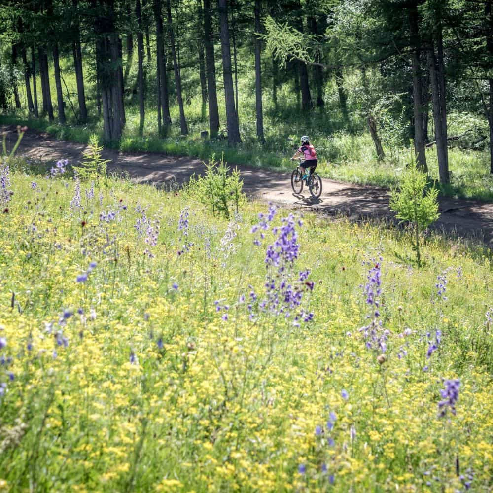 Cyclist riding through alpine meadow in Mongolia