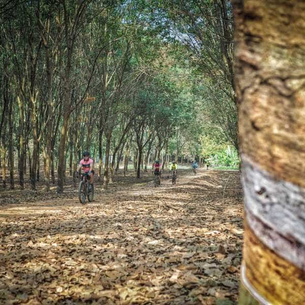 gravel cyclist in rubber plantation northern Thailand