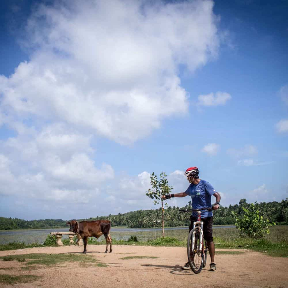 Bicycle tourist meets a cow in Sri Lanka