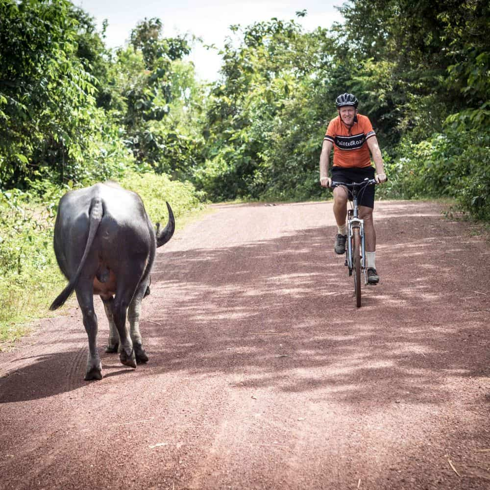 Western cyclist meets a water buffalo