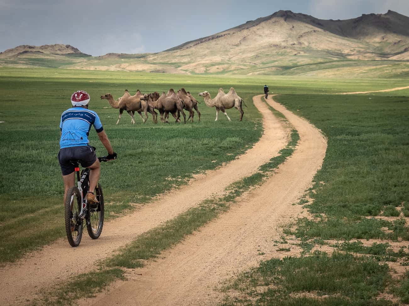a cyclist on tour in Mongolia passing a herd of camels