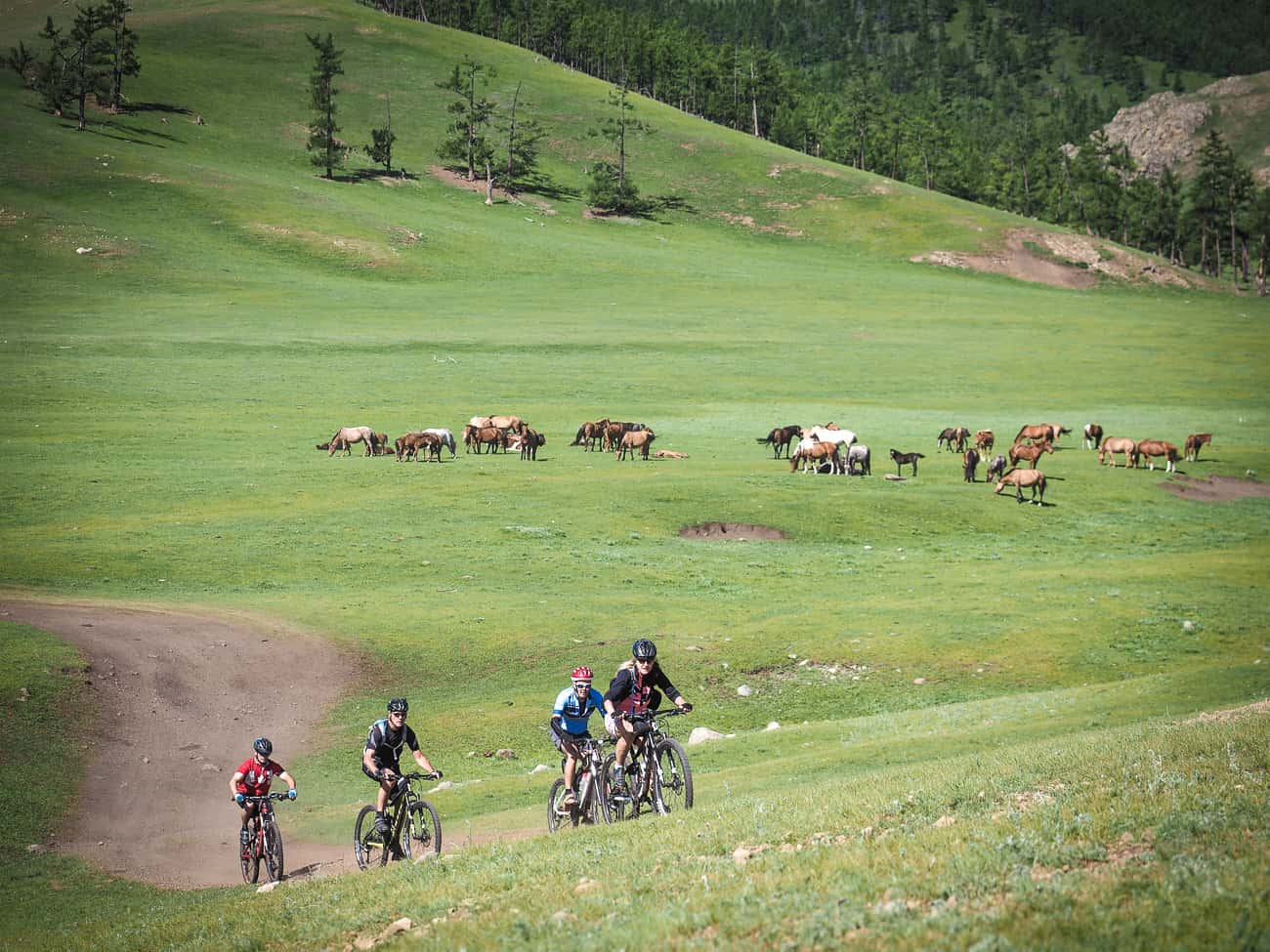 a group of cyclists climbing a hill in Mongolia on a gravel road