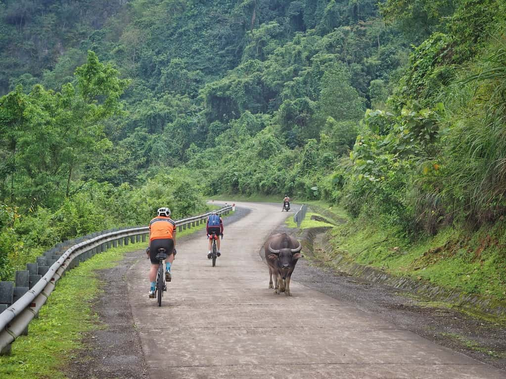 cyclists and buffalo on Vietnam's Ho Chi Minh Trail
