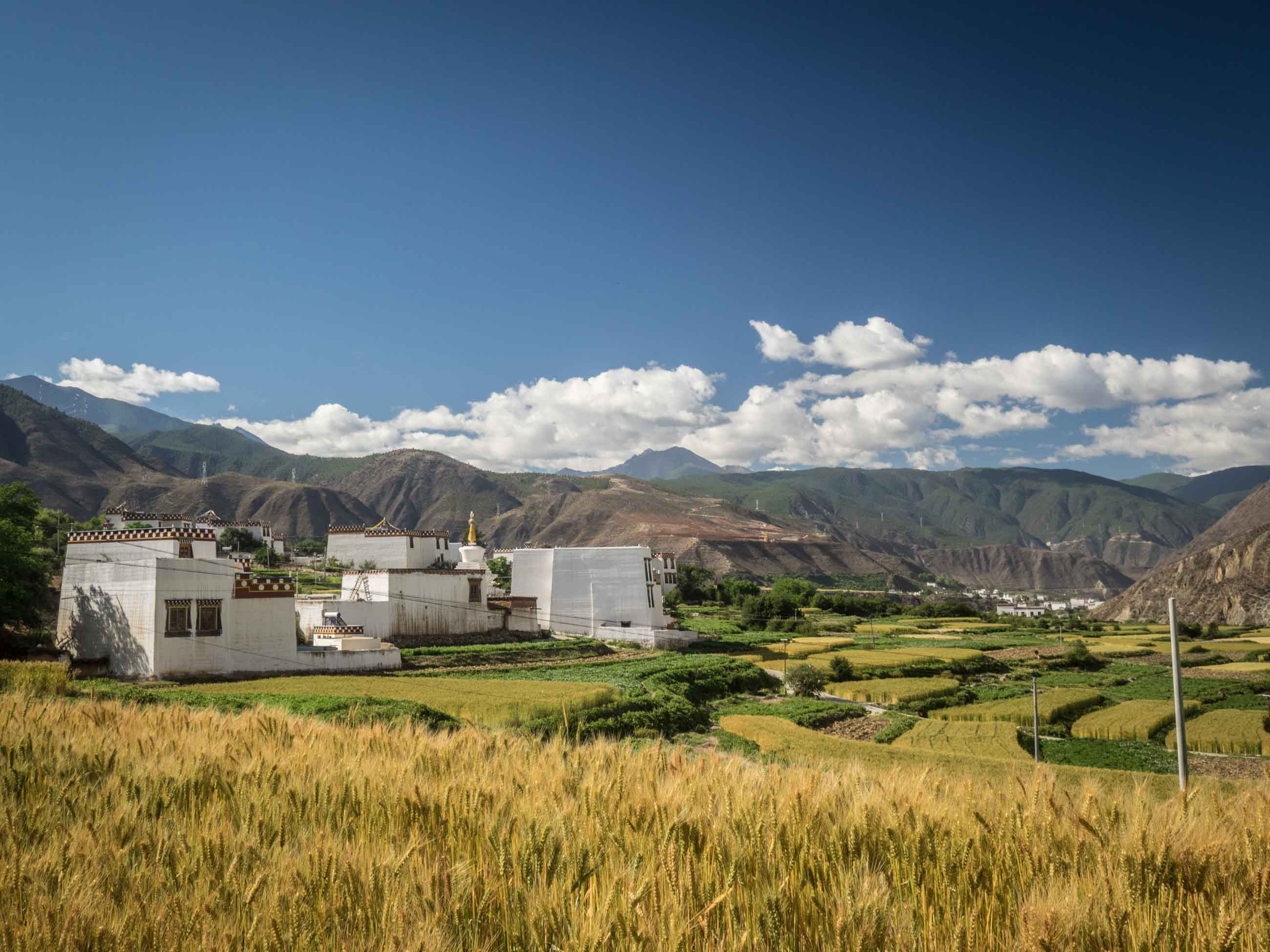 Tibetan house and barley field
