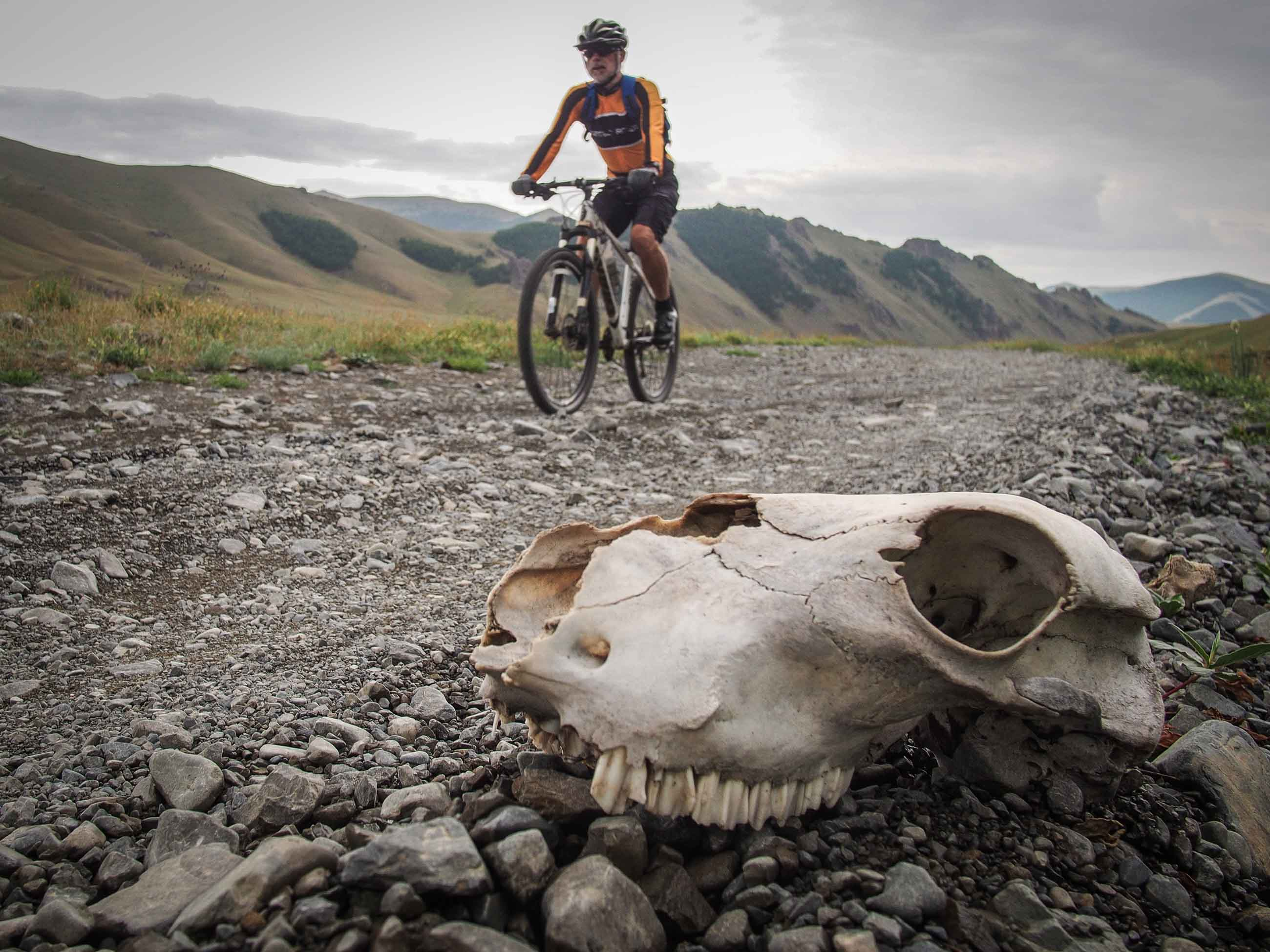 cyclists passing a scull in Mongolia