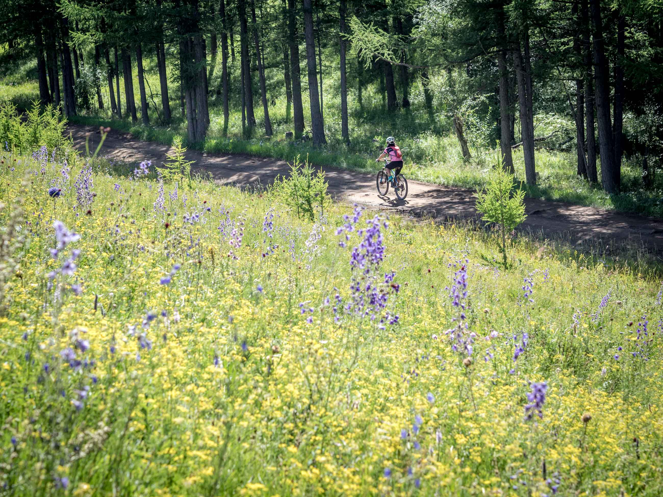 cycling through Mongolian meadow and flowers