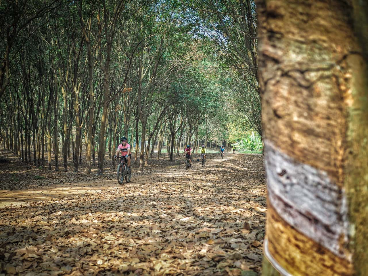 gravel bikes passing through rubber plantation during Thailand tour